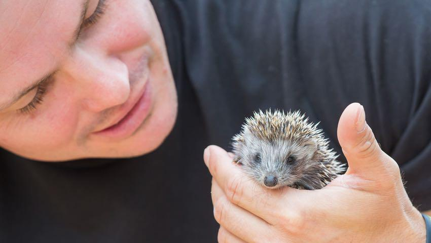Young Man with Hedgehog Baby